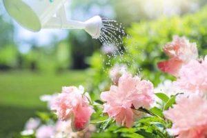 Watering on flowers
