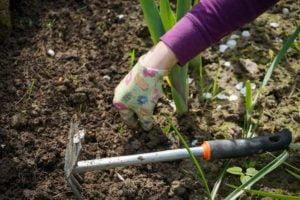 inspection for garden